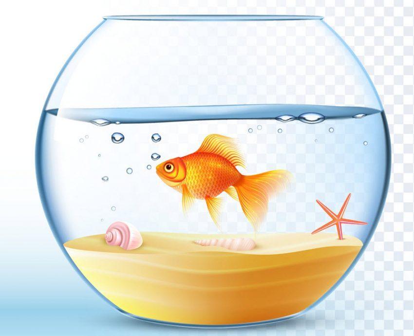 top 8 bai van mau ta con ca hay nhat 3 - Top 8 bài văn mẫu tả con cá hay nhất